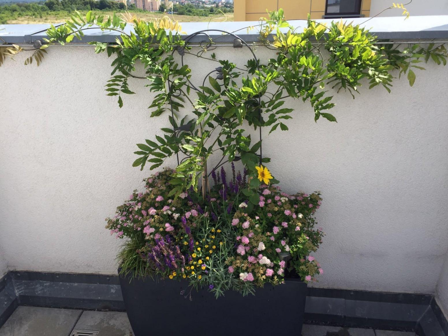 Nenáročné odolné rostliny na terasu - Terasa