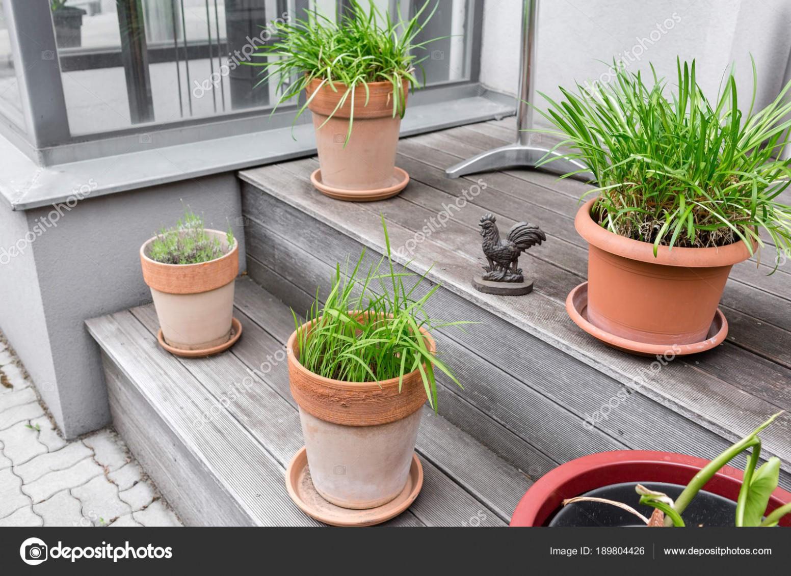 Rostliny na Terasu