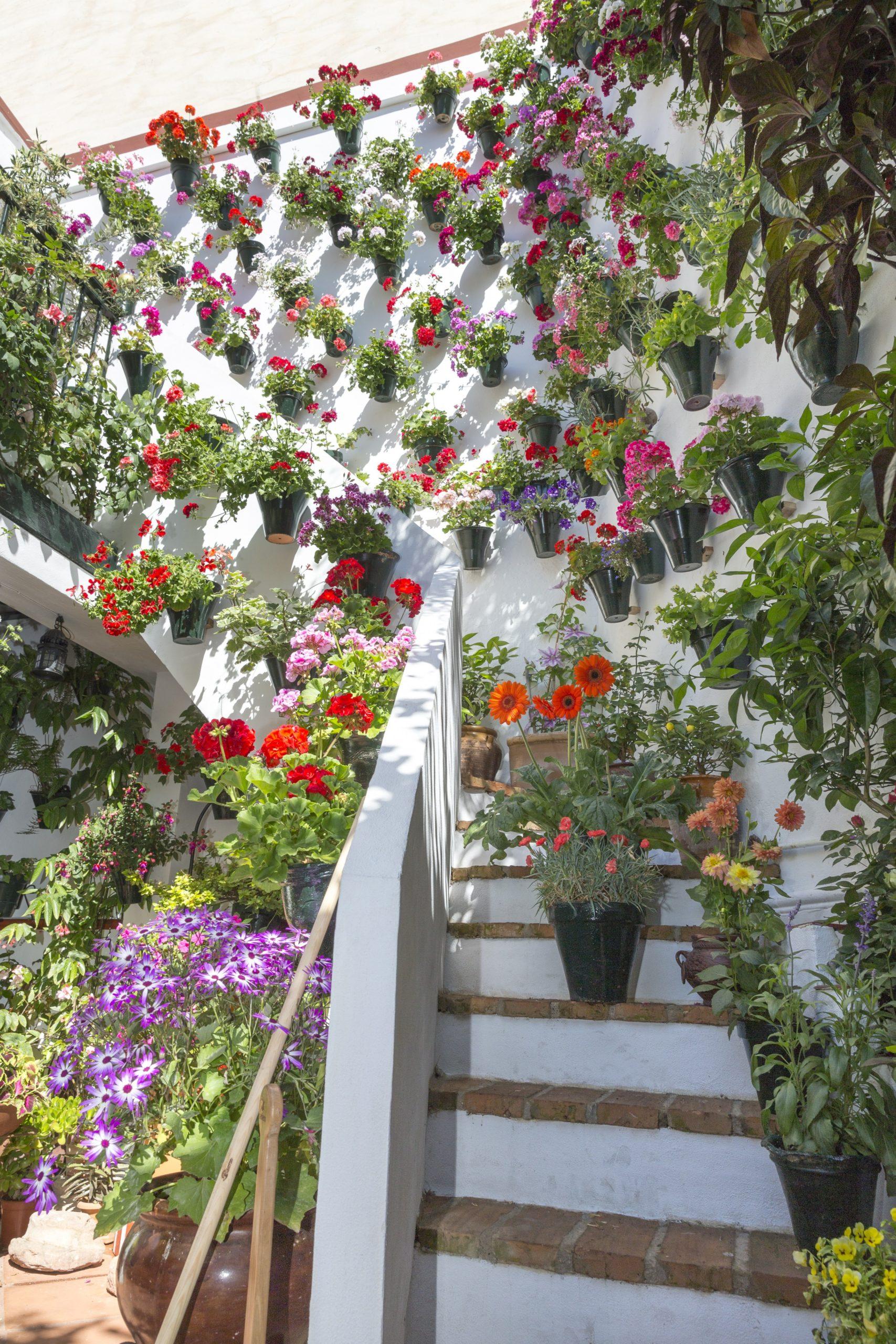 Free fotobanka : květ, jaro, zelená, zadní dvorek, botanika ...