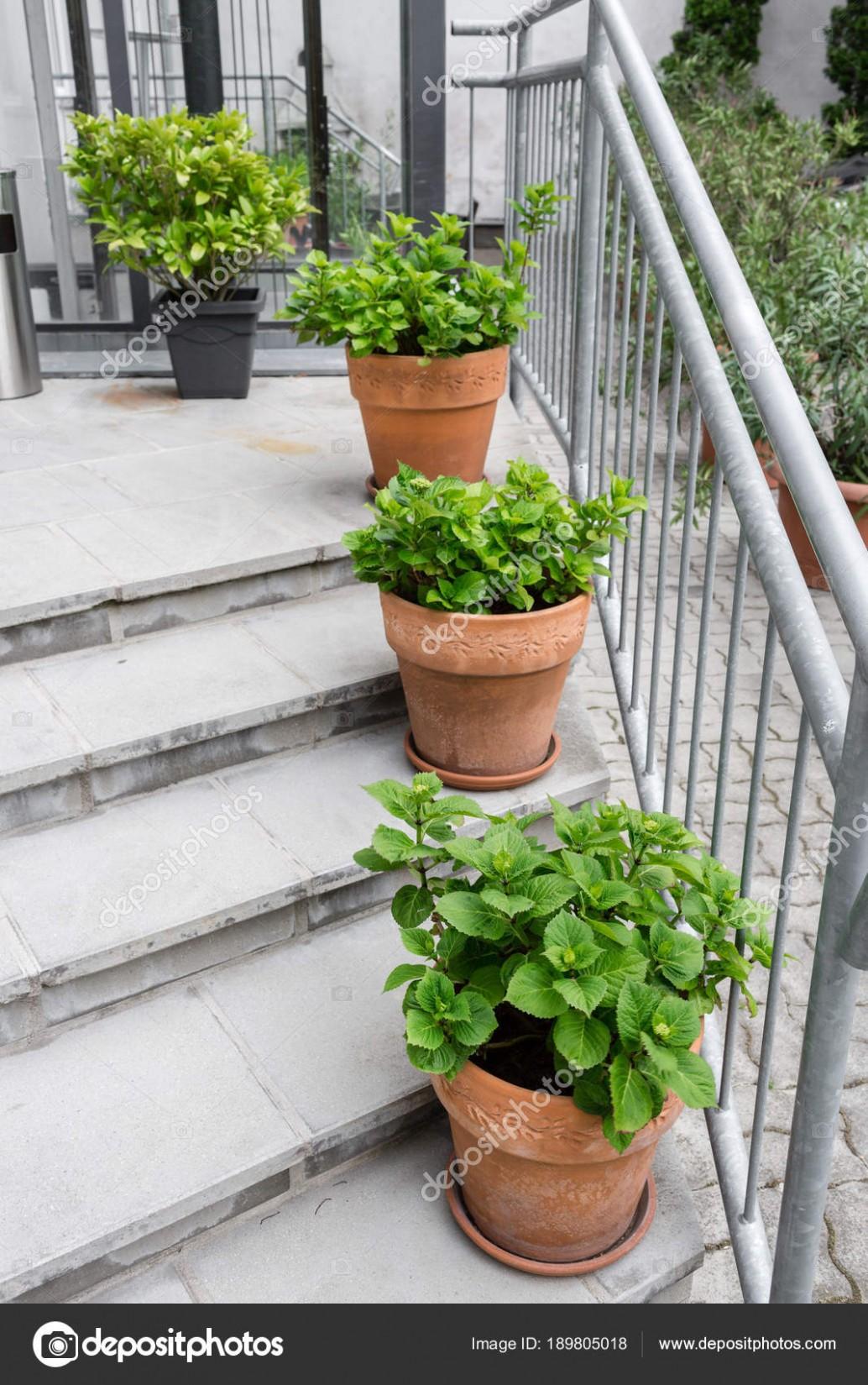 Zelené rostliny v květináčích. Venku na letní terase. Malé ...