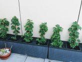 Fotky Nápady Nejlevnější Rostliny na Terasu