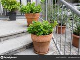 Sbírka Inspirace (19 Obrazů) Nejlepší z Rostliny na Terasu
