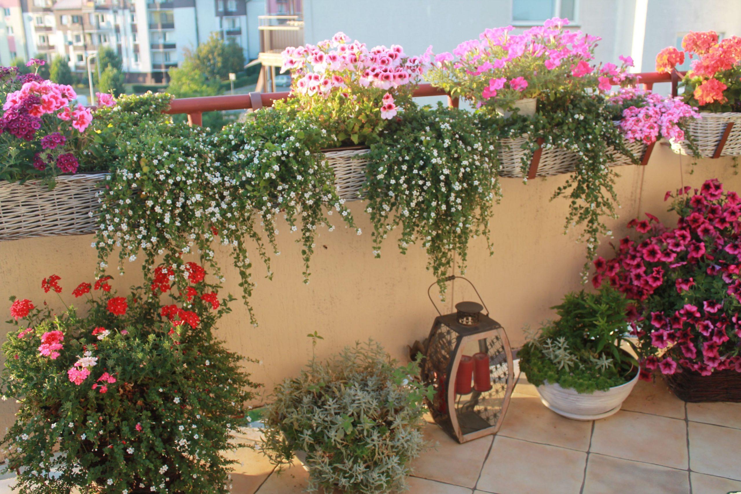 Květinové uspořádání terasy. Jaké rostliny na terase ...