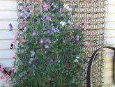 190+ Fotka Inspirace Nejvýhodnejší z Renovace Zahrady